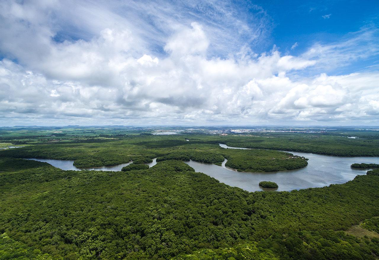 bild på skog i Brasilien