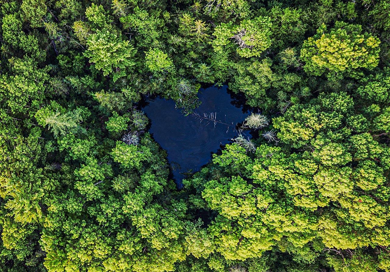 Kommersiellt skogsbruk bevarar